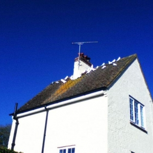 Simon Cross - Dorset:  Rooftop