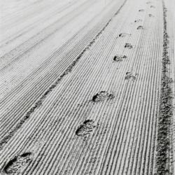Prints on Sand
