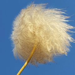 Blowing in the wind by Joy Gravestock
