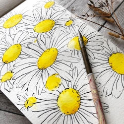 Daisies by Sue Bee